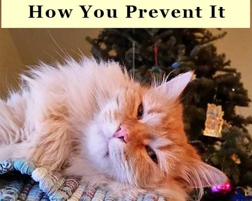 How to Prevent Cat Scratch Disease
