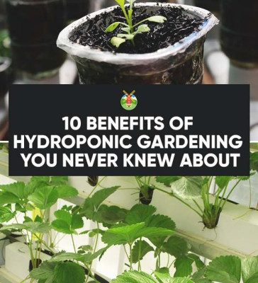 10-Benefits-of-Hydroponic-Gardening-You-Never-Knew-About-PIN