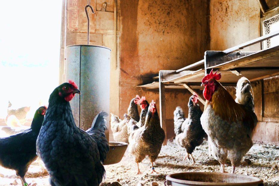 chicken bedding ideas