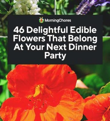 46-Delightful-Edible-Flowers-That-Belong-At-Your-Next-Dinner-Party-PIN-364x800