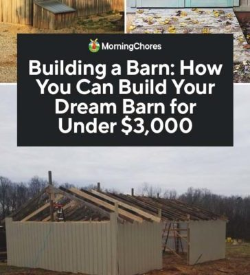 Building-a-Barn-How-You-Can-Build-Your-Dream-Barn-for-Under-3000-PIN-364x800