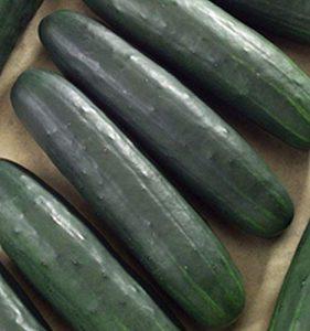Dasher-II-cucumber-variety-281x300