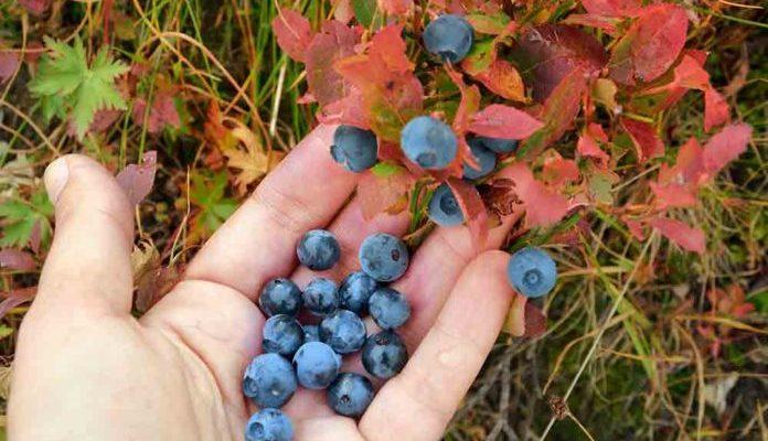 Foraging-wild-edibles-13-696x504