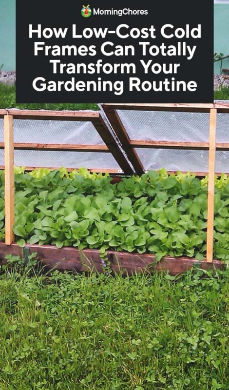 How To Use Low-Cost Cold Frames To Extend Your Gardening