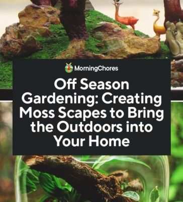 Off-Season-Gardening-Creating-Moss-Scapes-to-Bring-the-Outdoors-into-Your-Home-PIN-1-364x800