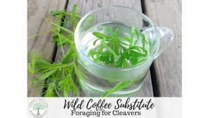 Wild-Coffee-Substitute-300x172
