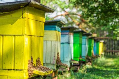 diy-beehive-400x267