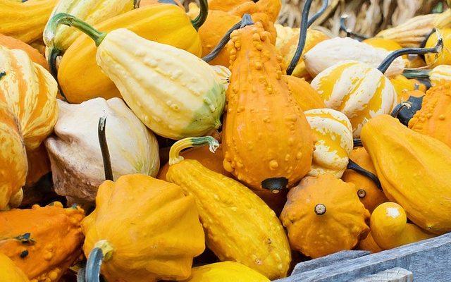 gourds-936516_640
