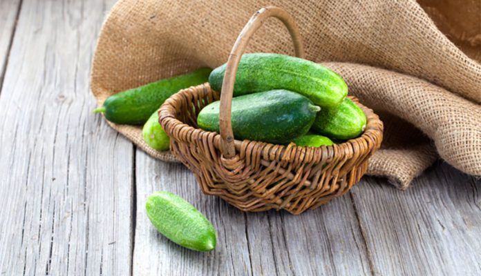 growing-cucumbers-in-pots-1-696x464