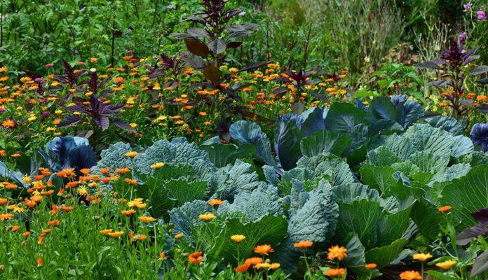 subsistence-farming-3-696x464